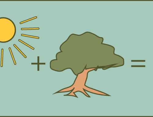Photosynthese: Jetzt kann es wirklich jeder verstehen!